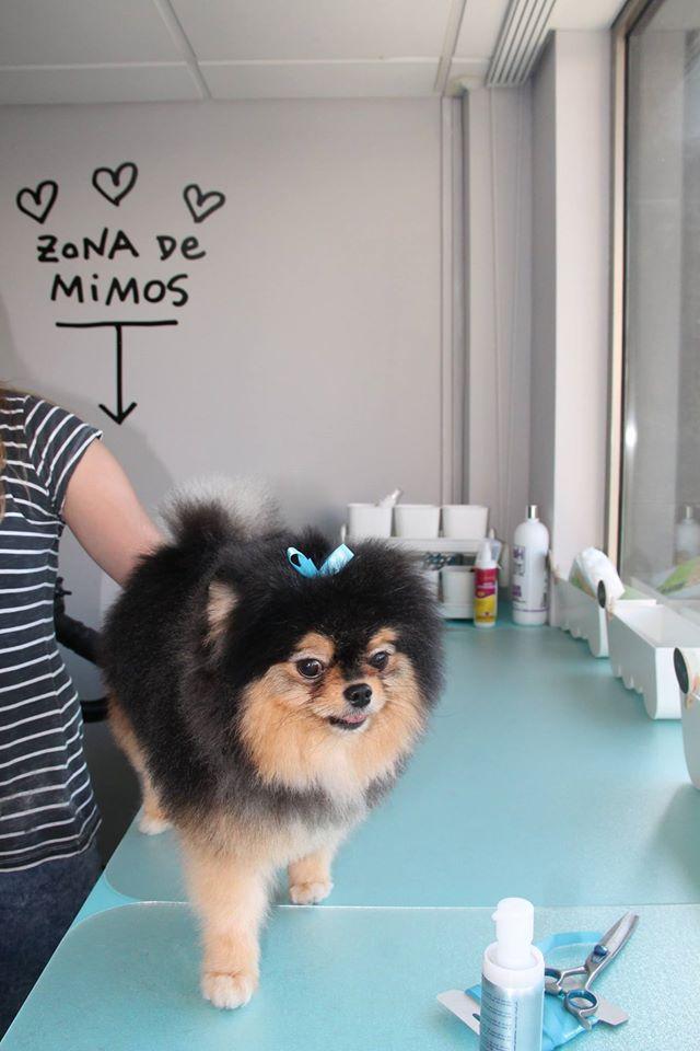 nueva peluqueria canina y felina en alicante dogsaffaire. Black Bedroom Furniture Sets. Home Design Ideas