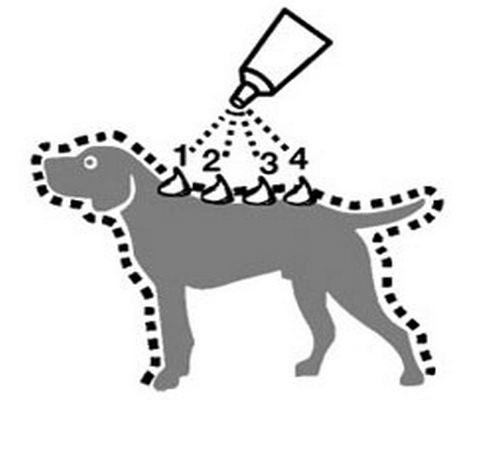 Collares y pipetas antiparasitarias para perro dogsaffaire - Pipeta advantix despues bano ...