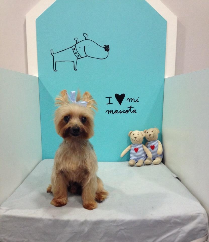 Peluqueria canina dog's affaire en alicante (4)