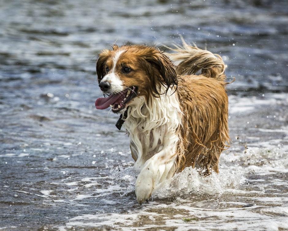 10-consejos-para-refrescar-tu-perro-en-verano