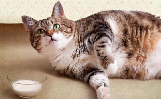 sobrepeso-mascota