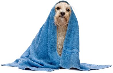 perro-secado-con-toallas1 (1)