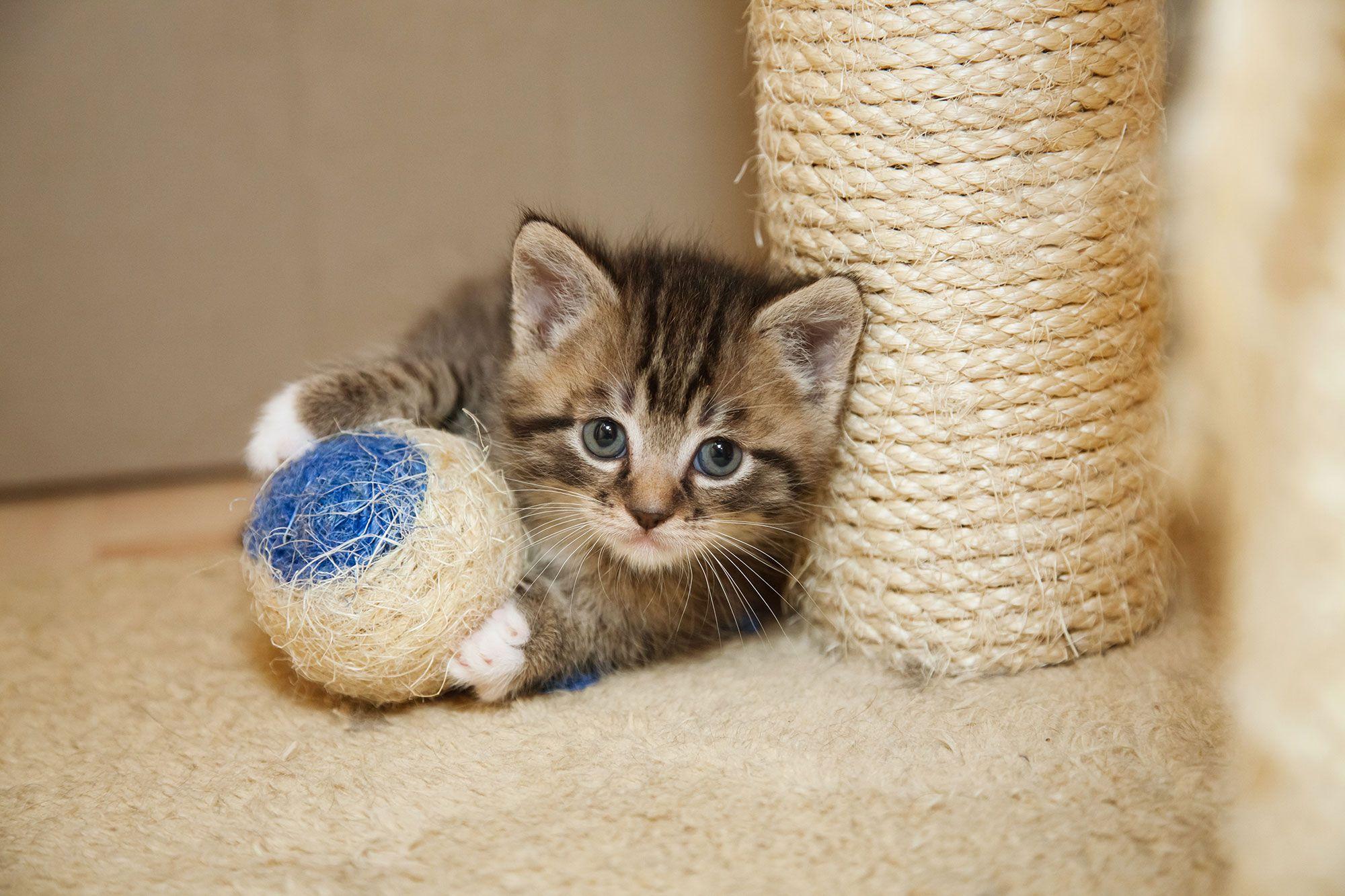 mascotas-rascadores-gatos-juego-XxXx80
