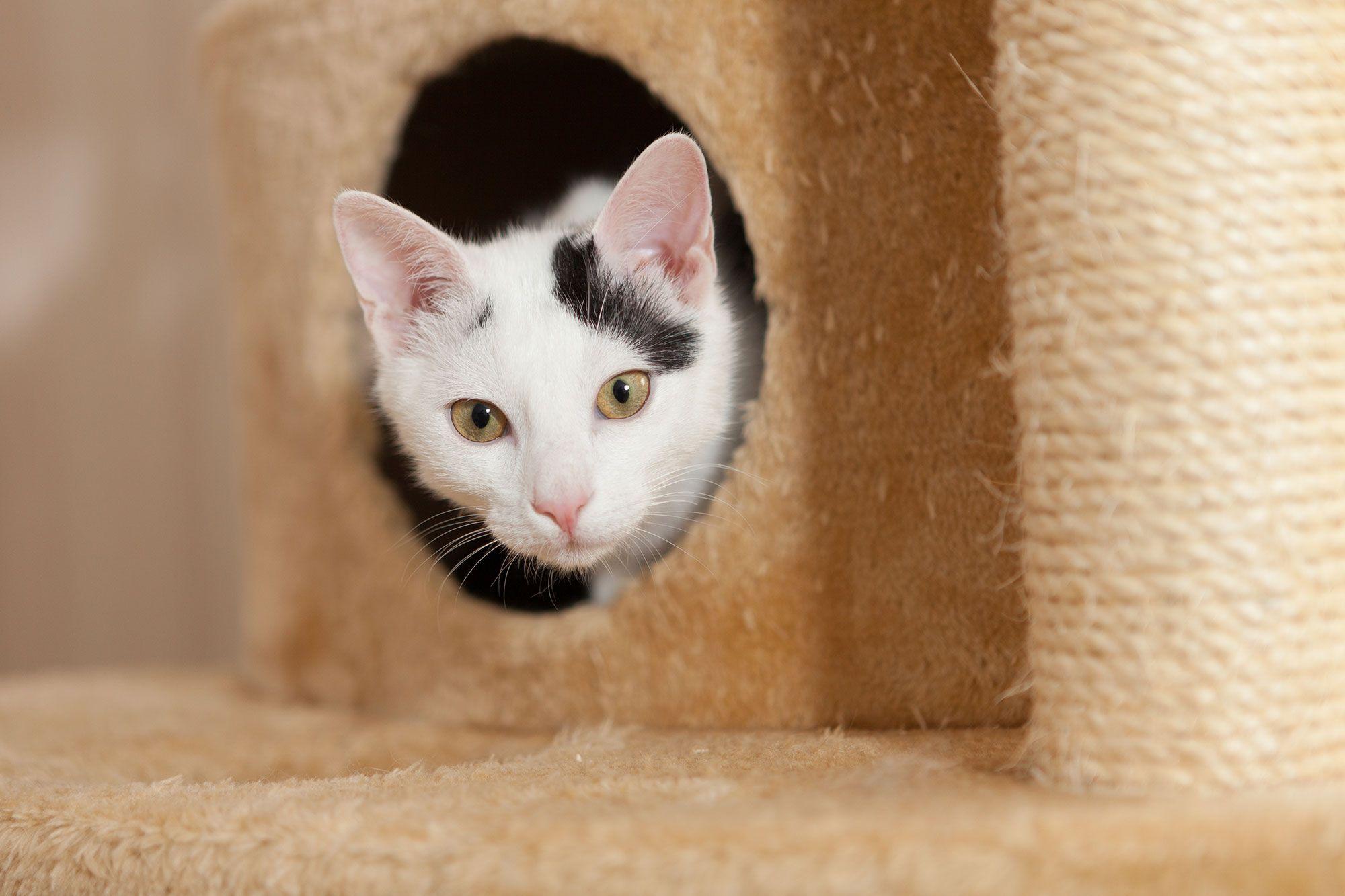 mascotas-rascadores-gatos-refugio-XxXx80