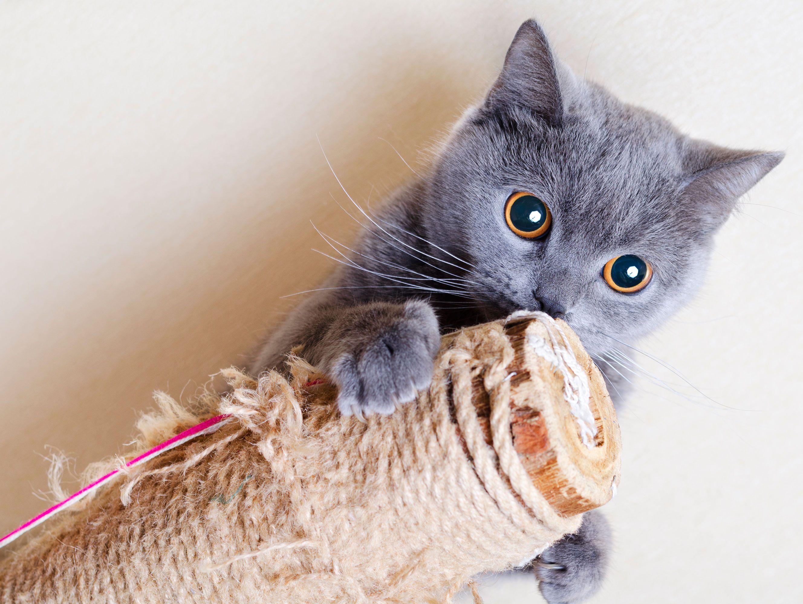 mascotas-rascadores-gatos-unas-XxXx80