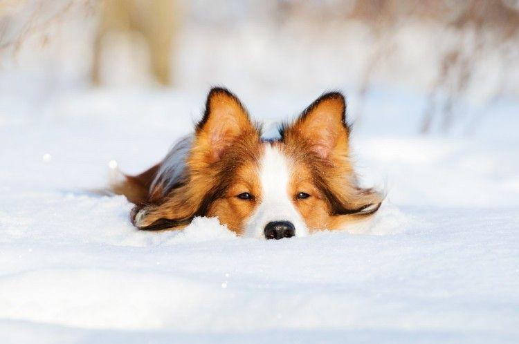 perros-adoran-nieve-art