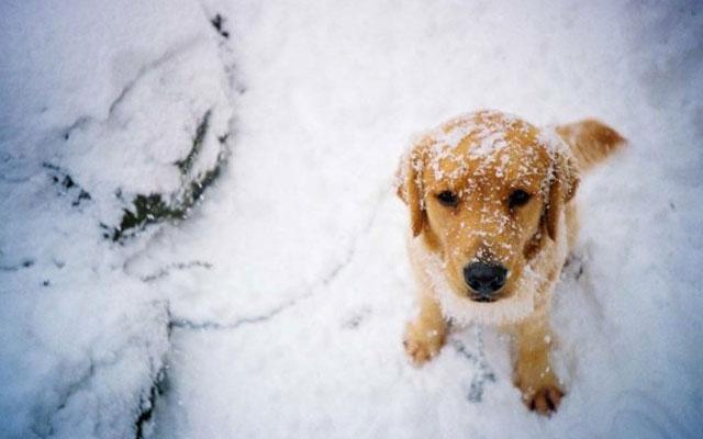 que-precauciones-debes-tomar-para-llevar-a-tu-perro-a-la-nieve