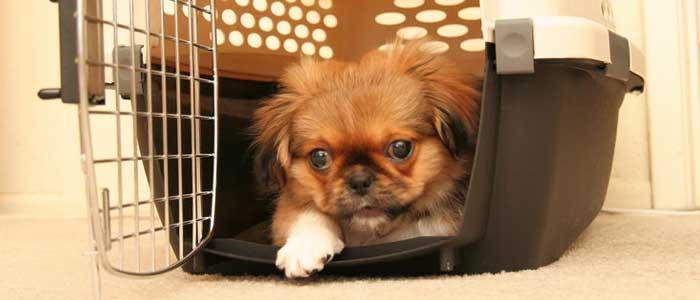acostumbrar-perro-transportin