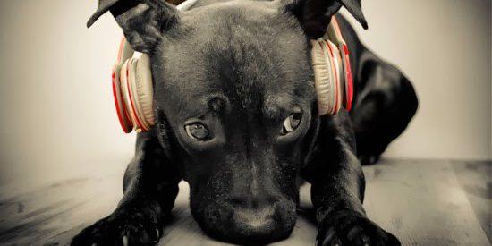 perros-miedo-a-los-petardos-550x275
