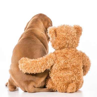 peluches para perro online dogsaffaire