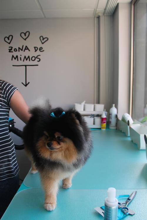 peluqueria canina y felina alicante