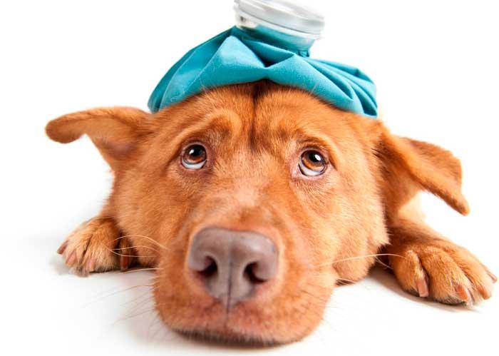 Pinzamiento cervical en perros