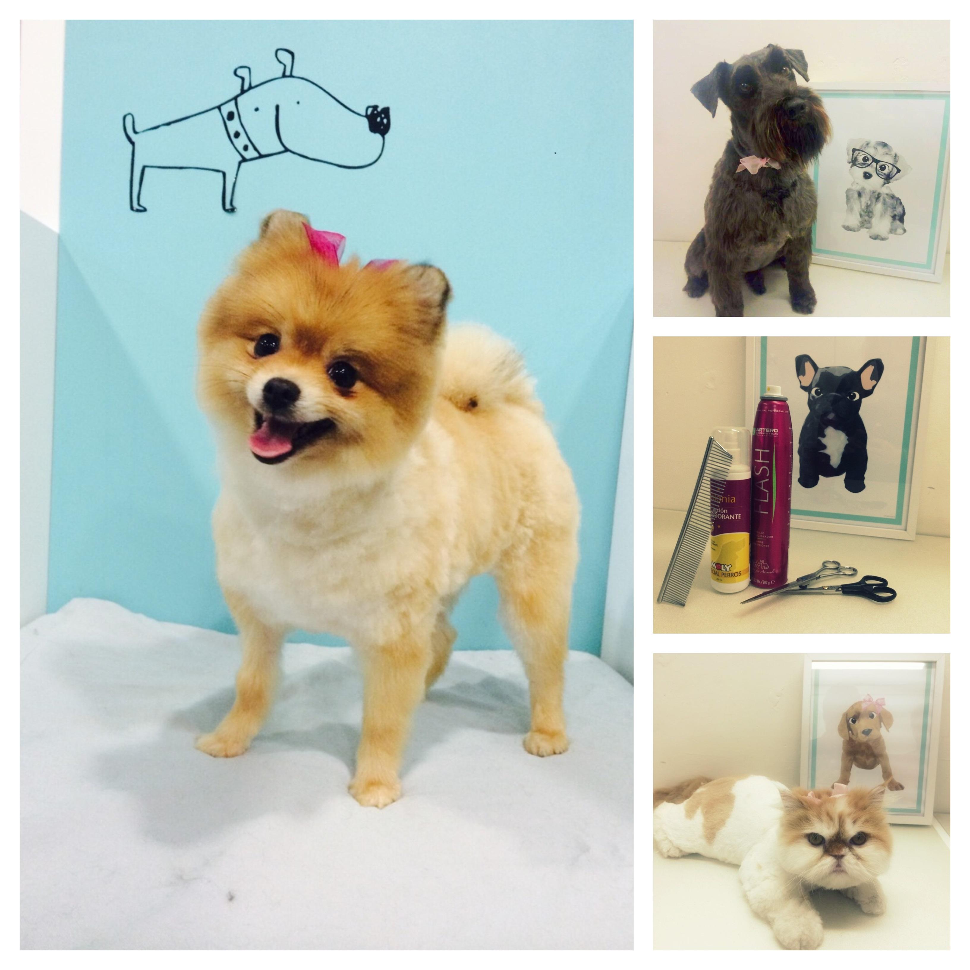 peluquería de perro, peluquería gatos alicante